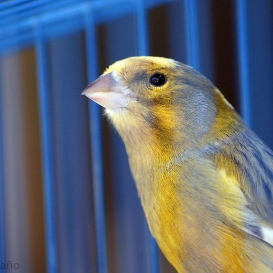 canary data center health monitor 42u solution